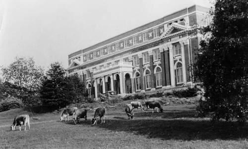 Auburn Cow College 3