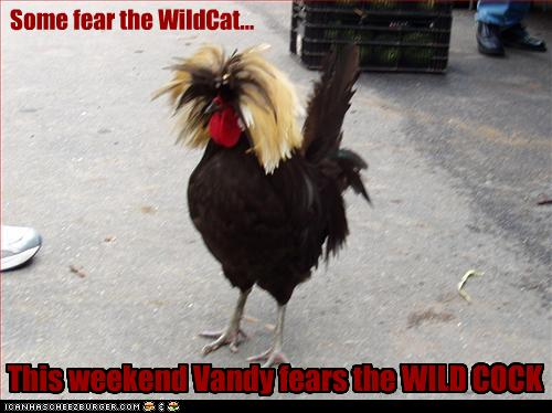 WildCockLOLrooster