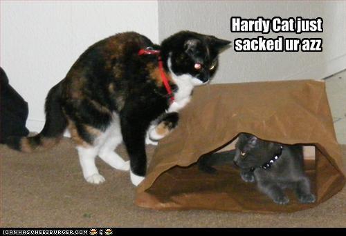 hardycat